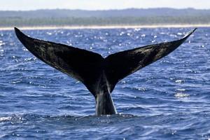 Les baleines sont visibles de juin à septembre