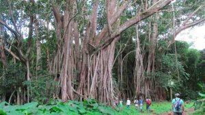 Jardin botanique N'Talatando