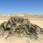 "Circuit ""Raid désert de Namibe"""