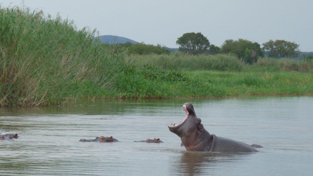 Concours-photo 2014- 085-Olivier_Rousseau-une grosse bête à Waku Kungo