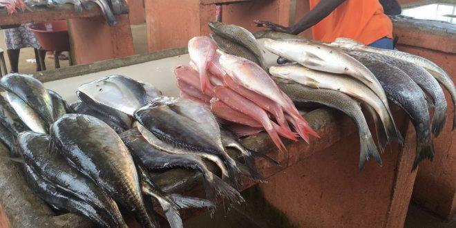 O acheter et manger du poisson vivre en angola for Poisson a acheter