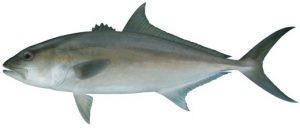 Peixe-azeite