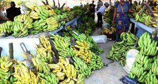 Foire de la banane Bengo