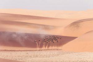 Les oryx du desert de Namibe