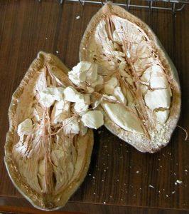 mukua, baobab