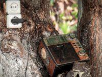 2ième prix amateur: Sons de la nature